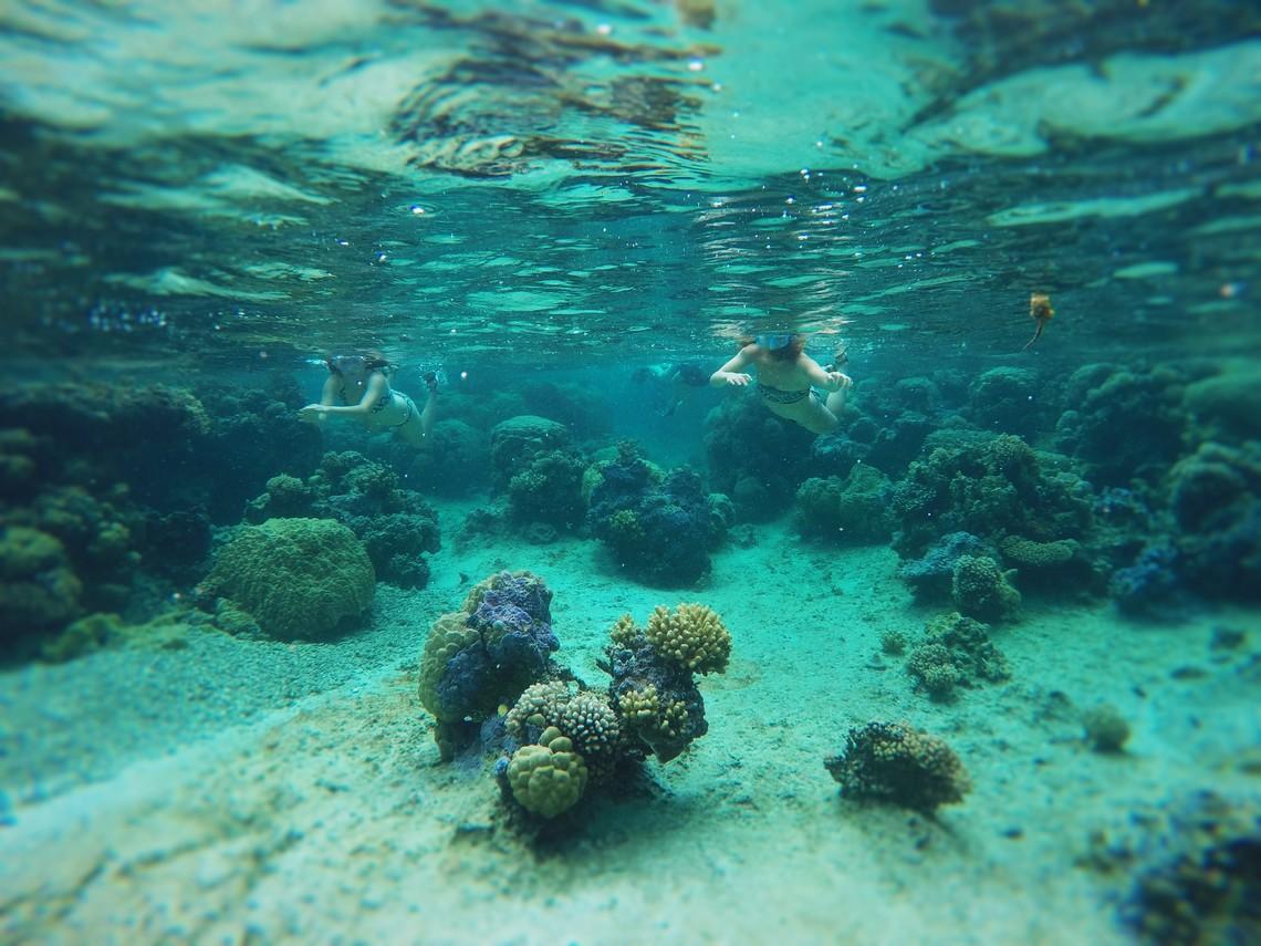 https://tahititourisme.cn/wp-content/uploads/2017/08/Bora-Bora-Reef-Discovery-2.jpg