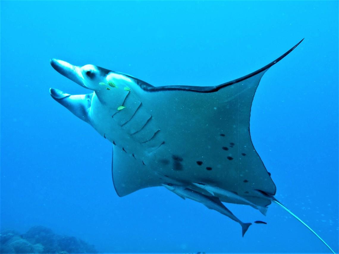 https://tahititourisme.cn/wp-content/uploads/2017/08/Bora-Bora-Reef-Discovery-3.jpg