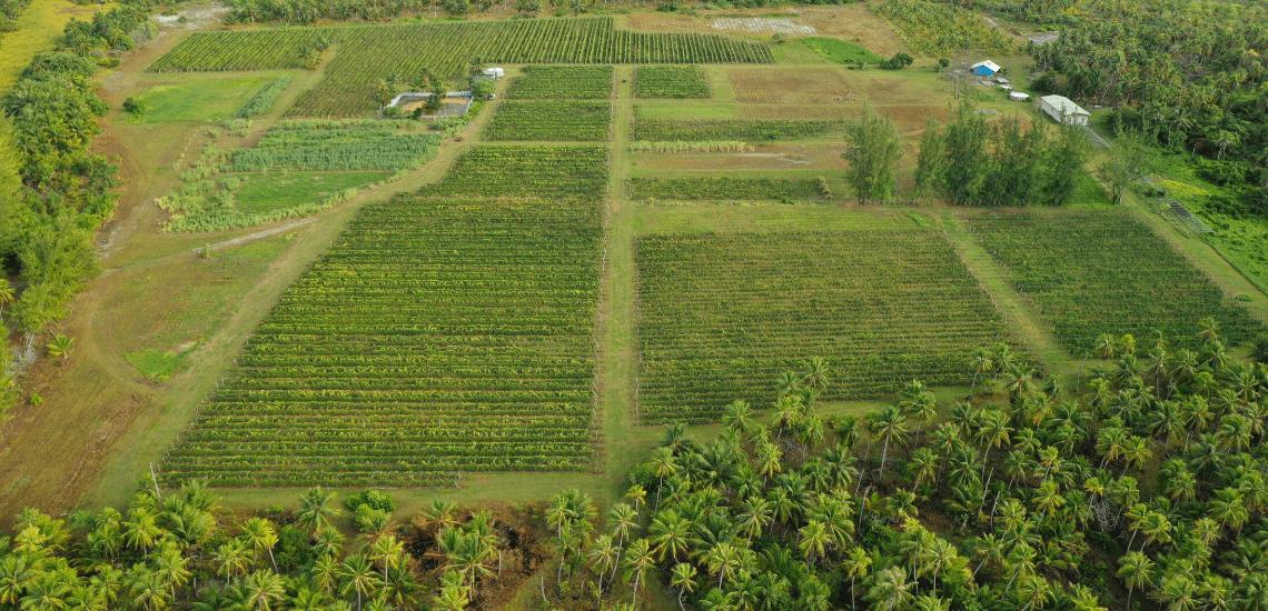 https://tahititourisme.cn/wp-content/uploads/2017/08/Vin-de-Tahiti_1140x550-min.png