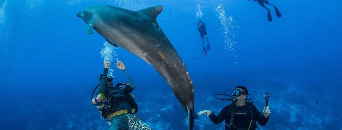 https://tahititourisme.cn/wp-content/uploads/2017/10/Rangiroa-Diving-Center-1150x440px.jpg