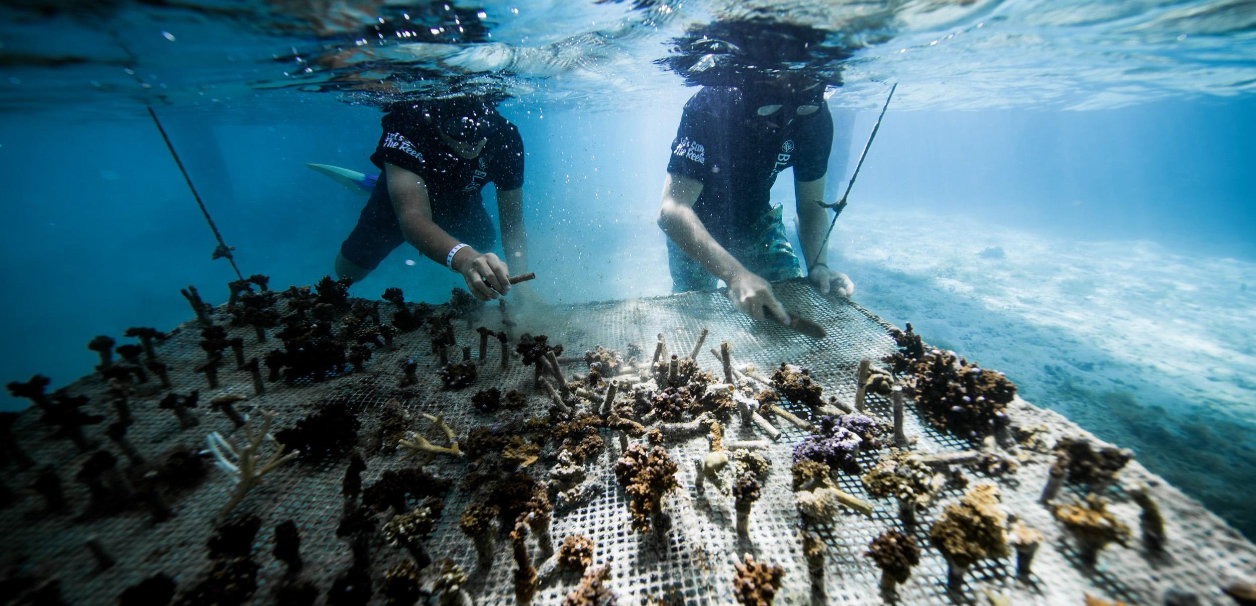 https://tahititourisme.cn/wp-content/uploads/2018/11/CoralGardeners-couv.jpg