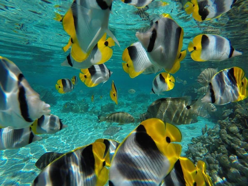 https://tahititourisme.cn/wp-content/uploads/2020/06/jardin-corail-tahaa-5.jpg