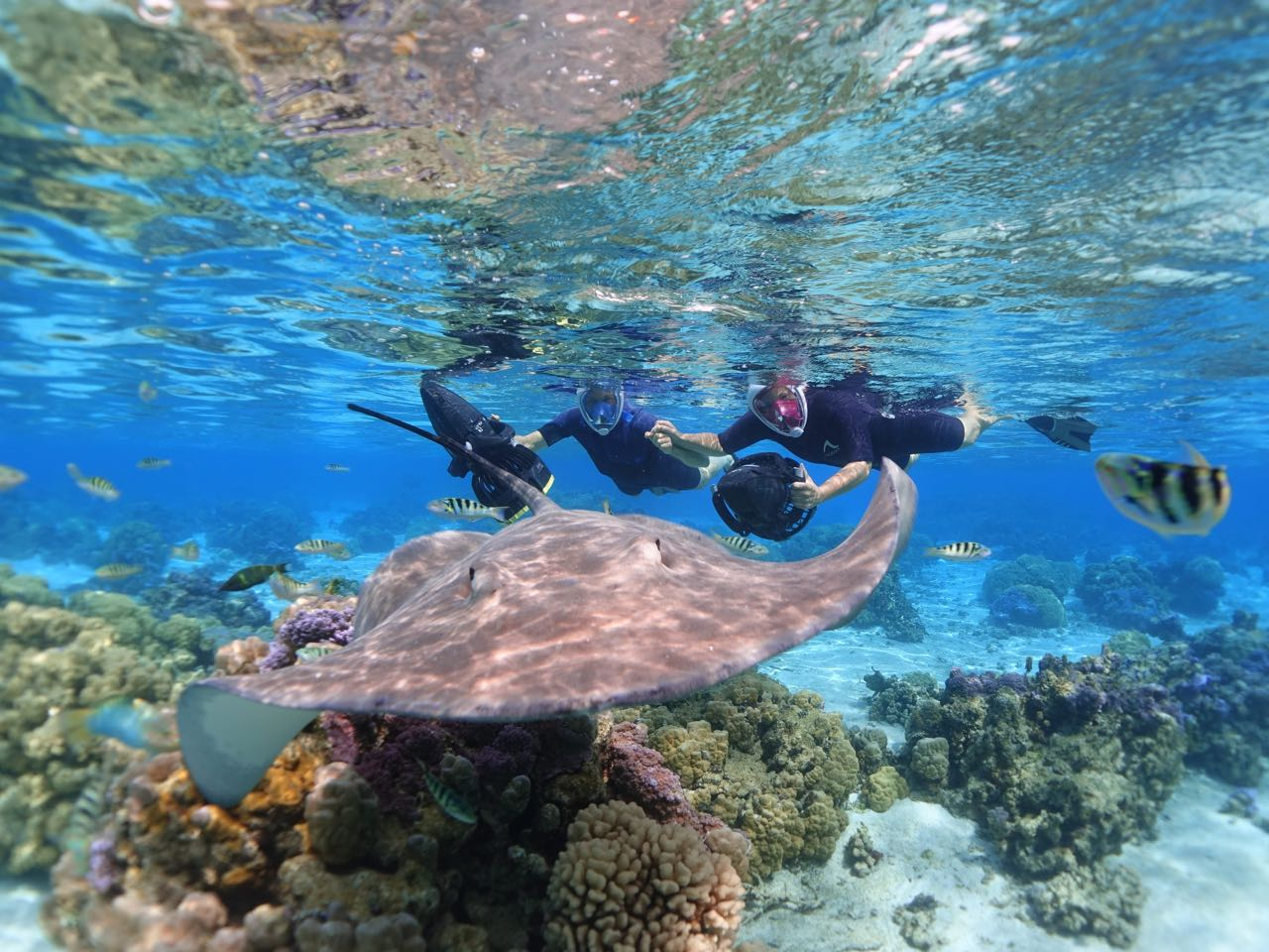 https://tahititourisme.cn/wp-content/uploads/2020/09/Sea-Scooter-Snorkeling-Tour-à-moorea-copie-2.jpg