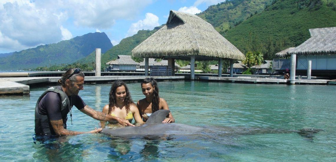 https://tahititourisme.cn/wp-content/uploads/2021/01/Offre_Moorea-Dolphin-Center.jpg